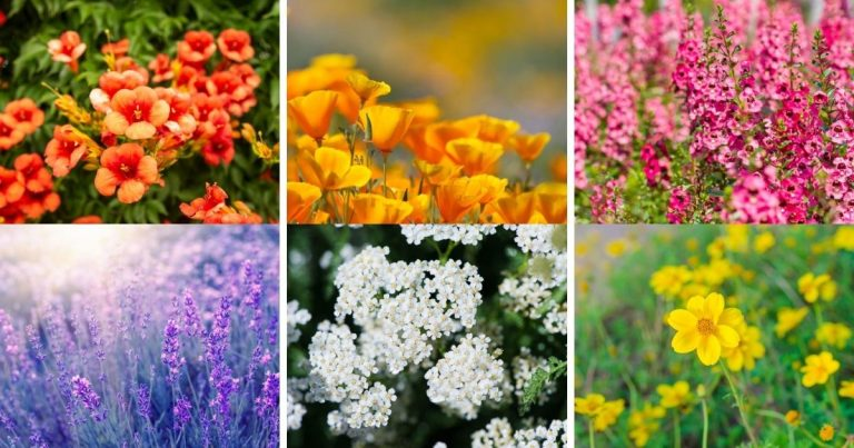 50 Drought-Tolerant Plants You'll Hardly Ever Have to Water