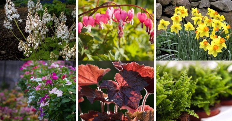 11 Plants That Thrive in Shade and Dry Climates