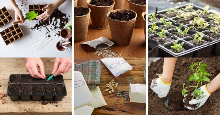 20 Most Common Seed Starting Mistakes and How to Avoid Them