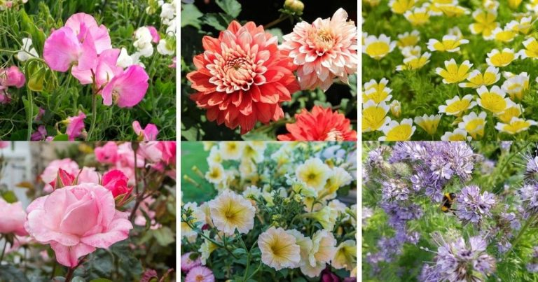 21 Flowers You Can Plant In Your Vegetable Garden