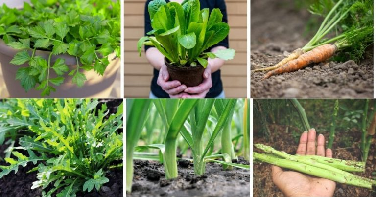 30 Vegetables You Can Harvest Multiple Times for Endless Supply