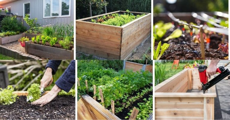 13 Common Raised Bed Gardening Mistakes