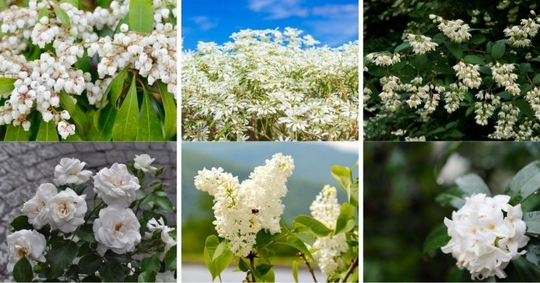 25 Of The Most Beautiful White Shrubs You Can Grow