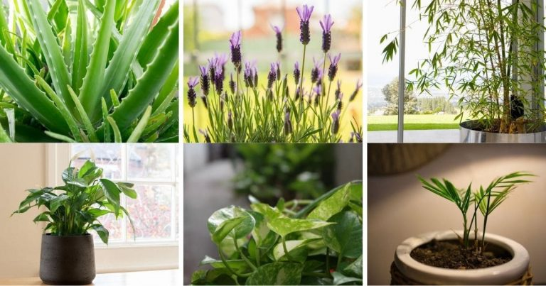 7 Indoor Plants That Will Make Gorgeous Room Dividers