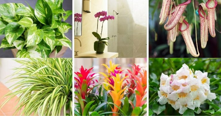 8 Vibrant Houseplants to Freshen up Your Bathroom