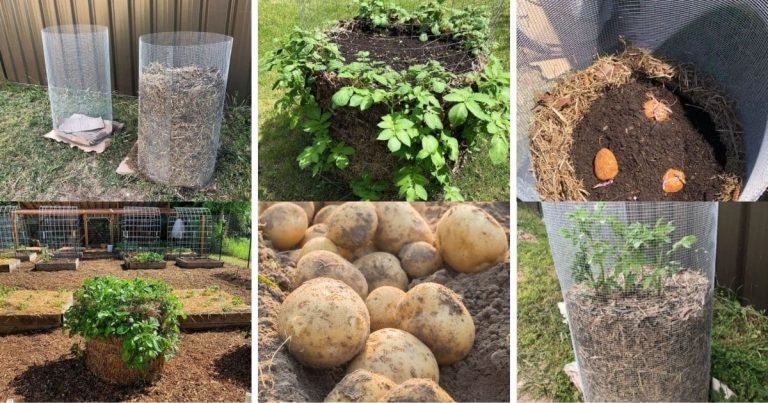 The Ultimate Guide to Potato Towers For A Great Potato Harvest