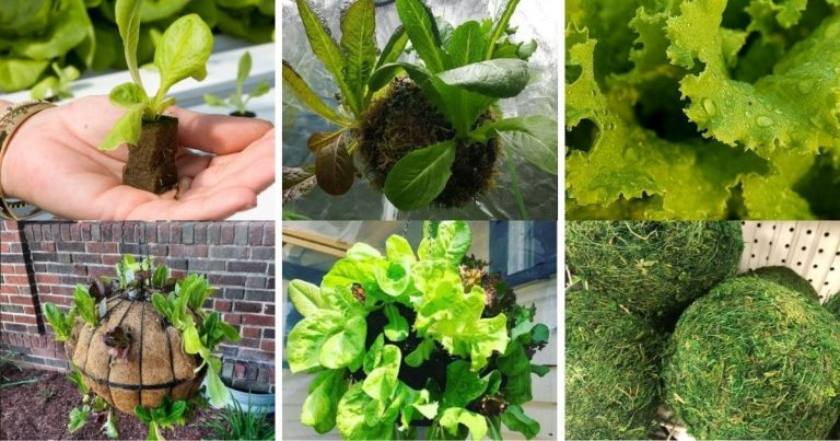 How to Make a Lettuce Globe Planter for Easy Salads All Summer