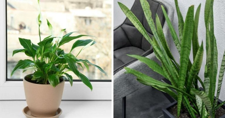 20 Plants For the Office to Increase Your Productivity