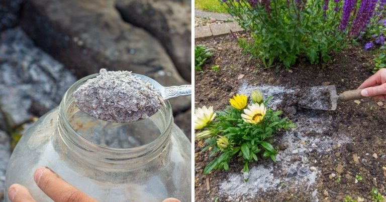5 Ways To Use Wood Ash In The Garden + How to Store it