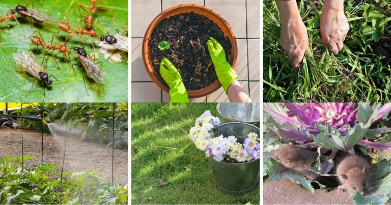 10 Genuis Borax Uses in the Garden That Will Surprise You